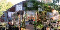 Kathy's Gorgeous Greenhouse