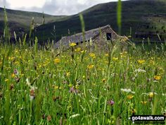 Walk Picture/View: Field of wild flowers after Kinder Scout, towards Edale in The Peak District, Derbyshire, England by Andrew Wright (2)