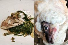 Ψαροφαγία: τρώγοντας ελληνικά και ιστορικά - Pandespani | Συνταγές Μαγειρικής, Tips & Μυστικά Fish, Chicken, Meat, Gourmet, Pisces, Cubs