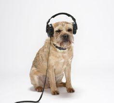 Audio lover! #muziek