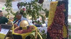 Halhoul grape festival, khaleel, palestine