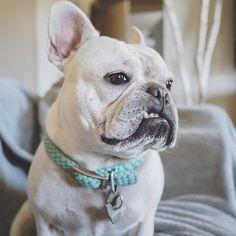 French Bulldog, @enzoandlina on Instagram ❤️