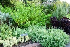 """This website is full of herb growing information! Browse through it and then attend our """"Dry and Use Herbs with Melinda Greenland of Nature's Lavender"""" session at 1:30 pm for adults at the Buckeye Library"""