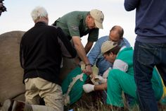 Work with skilled vets and conservationists to play a part in real 'once-in-a-lifetime' opportunities