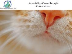 Acne felina Cause Terapia Cure naturali via @elicats