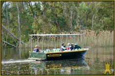 Take a ride on the Platanna and do some bird watching