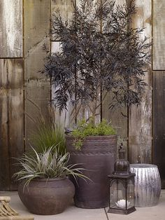 Love this color, mixed #containers..