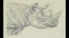 Sketching Rhinos in my sketchbook on my YouTube channel