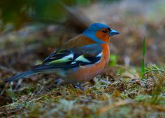 Bird Watching in new zealand