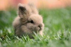Baby Bunnie...how cute !! *:)