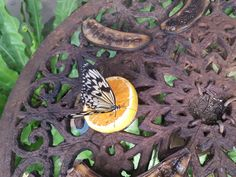 Homeschool open day at Butterfly world - Mamma & Bear Butterfly Park, Butterfly Life Cycle, Lizard Types, Largest Butterfly, Butterflies Flying, Opening Day, Bird Species, Cape Town, Small Groups