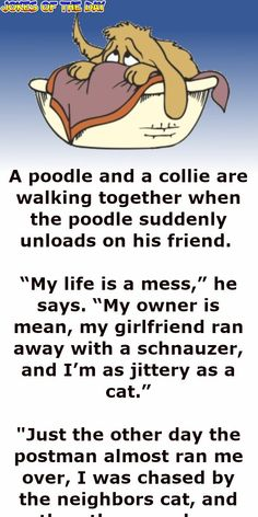 The poodle complains his life is a mess Clean Funny Jokes, Stupid Jokes, Stupid Stuff, Funny Relationship Jokes, Dog Jokes, Joke Of The Day, Really Funny Memes, Suddenly, Me As A Girlfriend