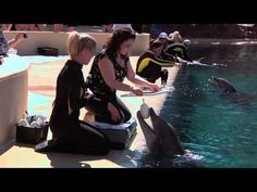 Behind the scenes at the Secret Garden and Dolphin Habitat's Painting with the Dolphins program at The Mirage.