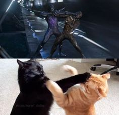 Just two cats fighting
