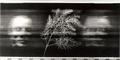 """Paolo Gioli, """"Volto attraverso il ramoscello di Talbot"""", 1991 fotofinish, stampa in bianco e nero, misure variabili"""