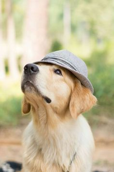 Here ist Simon, the #golden #retriever #goldenretriever from a friend. He's wearing my hat :D hihi.
