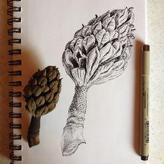 Seed Pod Study   Illustration by Noel Badges Pugh Botanical Line Drawing, Botanical Drawings, Botanical Art, Botanical Illustration, Graphite Drawings, Art Drawings, Art Black Love, Natural Form Art, Nature Drawing