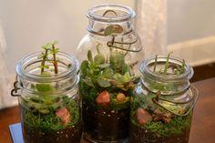 Een terrarium is makkelijk zelf gemaakt. Met een paar oude potten en wat kleine plantjes heb je snel een terrarium passend binnen de botanische interieur trend van nu.  - More plants, terrarium and interior inspiration on http://www.stylingblog.nl
