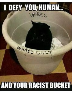 The Cat's Name Should Be White | Funny Pictures, Quotes, Pics, Photos, Images