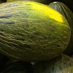The Piel de Sapo Melon is from Spain and is easy to grow in warm climates. Grow it from seed in a humus rich moist soil in a sunny position. Buy Seeds Online, Fun Deserts, Exotic Fruit, Trees And Shrubs, Fruit Trees, Vines, Berries, Home And Garden, Herbs
