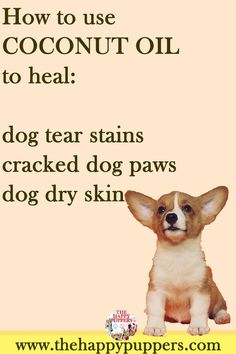Coconut oil can be used to treat tear stains cracked paws reduce arthritic pain . Coconut Oil For Dogs, Coconut Oil For Skin, Dry Dog Paws, Cracked Paws Dogs, Dry Skin For Dogs, Dog Tear Stains, Dog Hot Spots, Dog Nutrition, Oils For Dogs