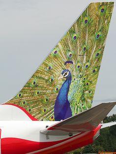 """Air-India Express B737-800nVT-AXT """"Peacock""""@ BFI"""