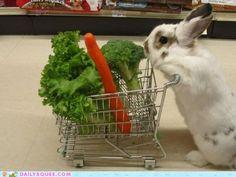 oh just doin some grocery shopping!