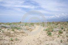 Landscape with sandy vegetation