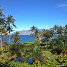 A view from the steps at The Marriot on #Maui @cariloha #pwinternship