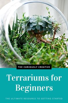The Ultimate Guide to Making a Terrarium for Beginners - The Curiously Creative Making a terrarium is really easy! Terrariums are miniature eco-systems that you can make on your own using a few simple items to get started. Glass Terrarium Containers, Terrarium Reptile, Hanging Glass Terrarium, Cactus Terrarium, Glass Terrarium Ideas, Best Terrarium Plants, Hanging Planters, Terrarium Centerpiece, Terrarium Wedding