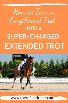Learn how to take your legthened trot and transform it into a powerful, action-packed extended trot. Perfect for 2nd level dressage and above. This article will give you several dressage exercises to engage the hind end and prepare the horse for a glorious extended trot. #extendedtrot #dressageexercises #dressage #dressagetraining Horse Exercises, Training Exercises, Western Riding, English Riding, Barrel Racing, Horse Training, Show Jumping, Horse Care, Dressage
