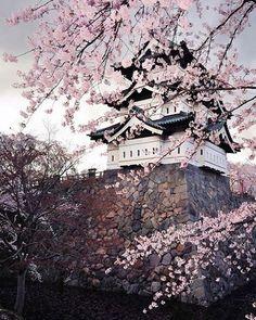 Osaka Castle🌸 📷 by ?? . . . . .  #japan #japón #japon #nippon #igers #instadaily #instatravel #travel #photography #love #picoftheday #landscape #🇯🇵 #photographer #日本 #instagood #素敵 #jco #japancommunity #visitjapan #amazing #traveling #travelphotography #travelgram #amazingview #madeinjapan #traditional #japanese #castle #osakacastle