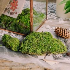 preserved moss Moss Garden, Garden Planters, Moss Centerpieces, Moss Terrarium, Moss Wall, Card Box Wedding, Garden Gifts, Event Decor, Preserves