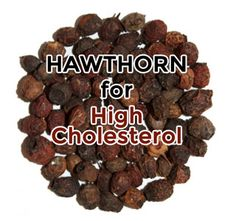 Due to hawthorn berry's ability to break down fats, hawthorn is useful in bringing down high cholesterol levels and reducing fat deposits in the body.