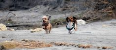 Peanut and Buttercup visit Gerani beach Chiweenie Dogs, Beach Rocks, Buttercup, Crete, Animals, Life, Animales, Animaux, Animal Memes