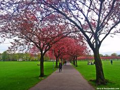 The Meadows Top 10 things to do in Edinburgh