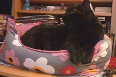 Petitcoeur teste la couchette de sa soeur