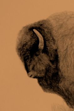 Bison Paintings   Buffalo Head Drawing