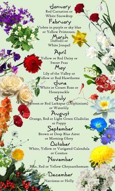 What's your birth flower tattoo...here's a good reference