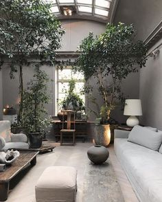 Tree Interior, Interior Design Living Room, Living Room Designs, Living Room Decor, Interior Plants, Living Rooms, Autumn Interior, Flat Interior, Studio Interior