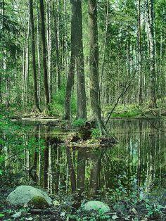 Magic forest green, Espoo, Leppavaara, Southern Finland // photo by Sameli Kujala