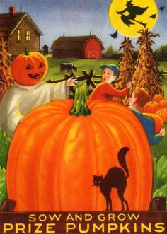 Sow and grow prize pumpkins! #vintage #pumpkins #Halloween #ads