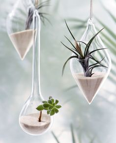 Let's make a living room decoration using air plants to decorate your living room. This air plant display idea will help you decorate your home using this unique plant. These indoor plants ne… Hanging Air Plants, Hanging Vases, Diy Hanging, Indoor Plants, Hanging Succulents, Indoor Succulents, Indoor Herbs, Hanging Gardens, Mini Plants