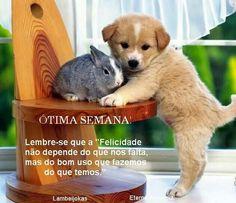 Gato Gif, Corgi, Animals, Portugal, Pasta, Good Night Funny, Good Night Sweet Dreams, Being Happy, Animales