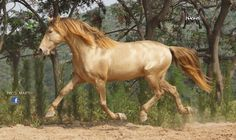 golden champagne horse