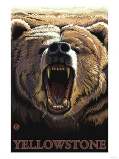 Missoula, Montana - Bear Roaring Poster (Sometimes, you gotta let it out. Waterton National Park, Yellowstone National Park, Voyage Usa, Angry Bear, North To Alaska, Parda, Ketchikan Alaska, Canada National Parks, National Park Posters