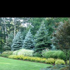 Love the layering here .,,, backyard