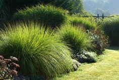 Graminées au jardin contemporain