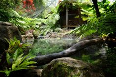 Natural swimming pool in Coffs Harbour NSW
