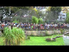 Luxury K ln Zoo